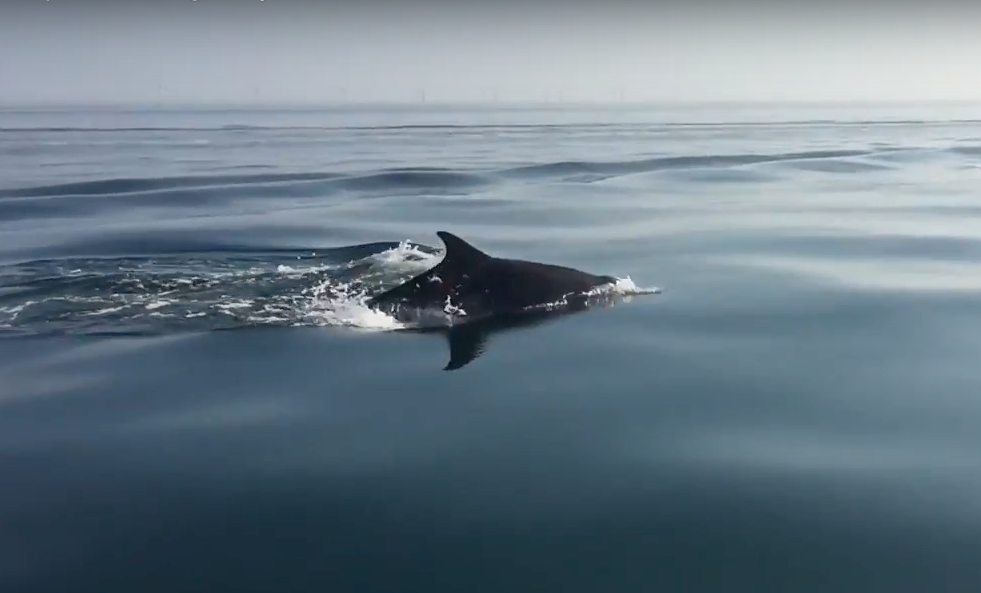 Spotting Dolphins in North Wales